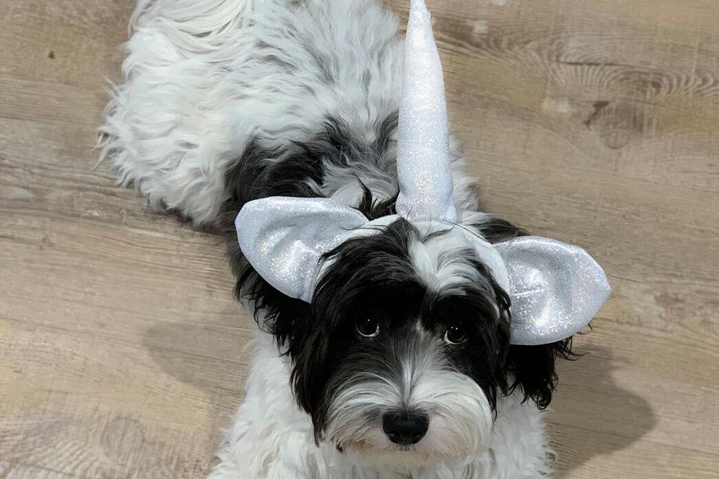 Unicorn Dog Mio